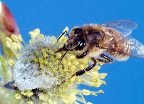 BeesNeeds1