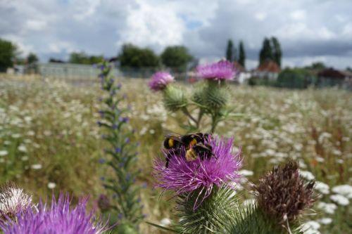 BeesNeeds2