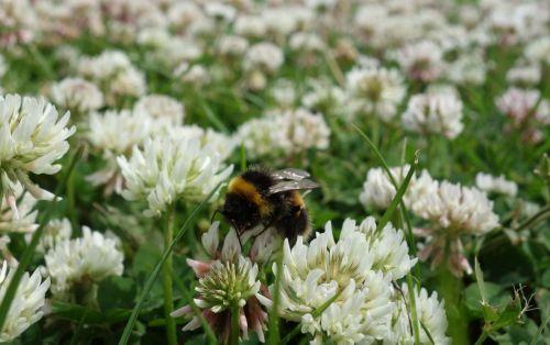 BeesNeeds3